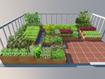 Kĩ thuật trồng rau sạch tại nhà