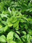 Hướng dẫn cách trồng rau lủi