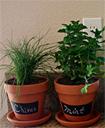 Tự trồng rau gia vị tại nhà