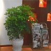 Nguyên tắc bố trí cây xanh trong phòng làm việc