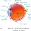 Giáo án Vật lý nâng cao bài Mắt
