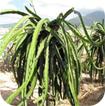 Giáo án Một số loại cây sống trên cạn