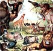 Giáo án Khoa học bài Động vật ăn gì để sống