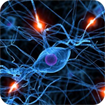 Giáo án bài Hệ thần kinh sinh dưỡng