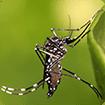 Phòng và chống bệnh sốt xuất huyết hiệu quả