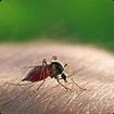 Triệu chứng và cách điều trị sốt xuất huyết