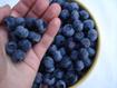 Những thực phẩm cung cấp collagen tự nhiên cho da