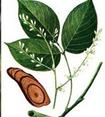 Những bài thuốc chống thoái hóa cột sống cổ