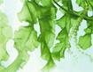 Những loại rau củ nên ăn để cơ bắp chắc khỏe