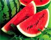 Tác hại khi ăn dưa hấu không đúng cách