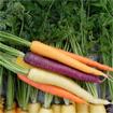 Những điều thú vị bạn ít biết về cà rốt