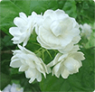 9 loài hoa cấm kỵ tuyệt đối không đặt trên ban thờ