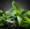 Các loại thảo dược có công dụng phòng bệnh ung thư