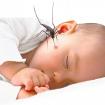 Chăm sóc và phòng ngừa khi trẻ bị sốt xuất huyết