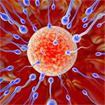 Giáo án Sinh học 9 bài Phát sinh giao tử và thụ tinh