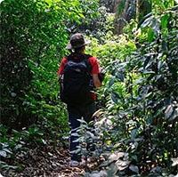Kỹ năng sống trong rừng cực hay bạn nên biết