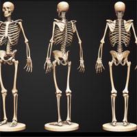 Giáo án Sinh học 8 bài Cấu tạo và tính chất của xương