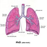 Giáo án Sinh học 8 bài Hô hấp và các cơ quan hô hấp