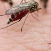 Bí quyết bảo vệ bạn khi dịch sốt xuất huyết bùng phát