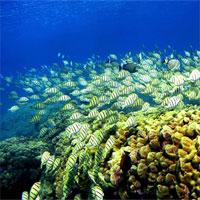 Giáo án Sinh học 7 bài 32: Thực hành mổ cá