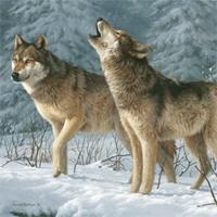 Bài văn mẫu lớp 9: Phân tích hình ảnh Con chó Bấc trong truyện ngắn Tiếng gọi nơi hoang dã của Giắc Lân-đơn