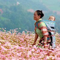 Hình ảnh người mẹ trong bài thơ Khúc hát ru những em bé lớn trên lưng mẹ của Nguyễn Khoa Điềm