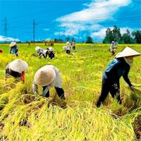 Giáo án mầm non đề tài: Bác nông dân vui tính