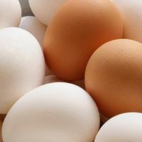 Mẹo đơn giản nhận biết trứng gà công nghiệp bị tẩy trắng