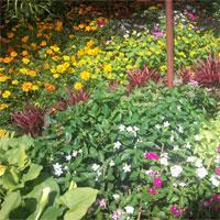 Giáo án Sinh học 6 bài Tổng kết về cây có hoa