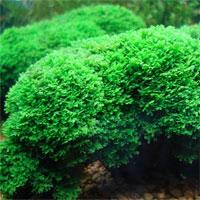 Giáo án Sinh học 6 bài Rêu và cây rêu