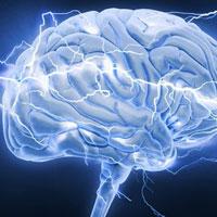 Não bộ của bạn có khả năng phản ứng nhanh nhạy không?