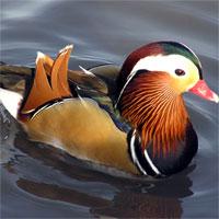 Giáo án Sinh học 7 bài Thực hành xem băng hình về đời sống và tập tính của chim