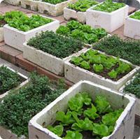 Hướng dẫn toàn bộ kinh nghiệm trồng rau trên sân thượng cực chuẩn