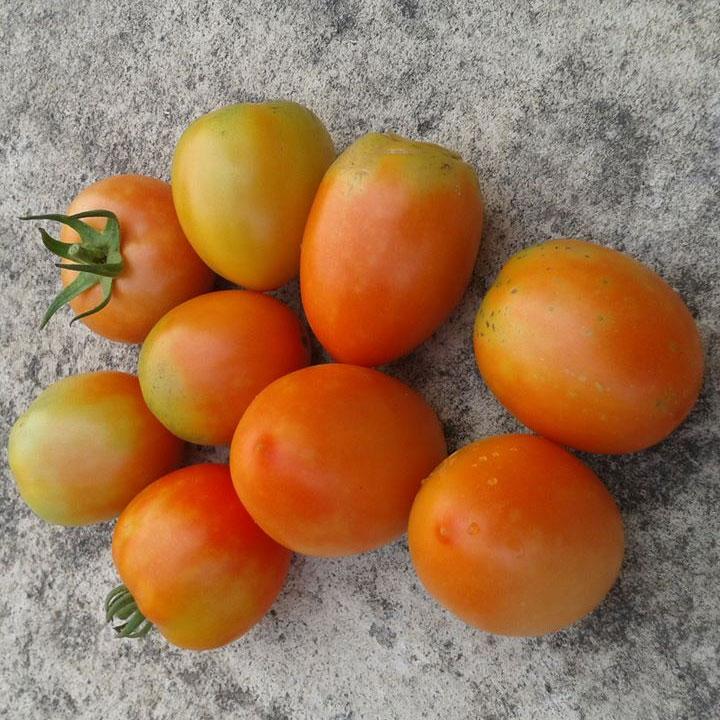 kinh nghiệm trồng rau trên sân thượng cực chuẩn