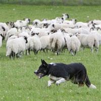 Giáo án mầm non đề tài: Kể chuyện sáng tạo về thế giới động vật