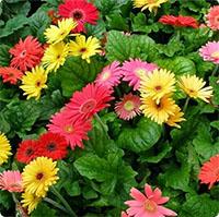 Những loại hoa nhất định phải mua trong dịp Tết