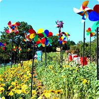 Festival hoa Đà Lạt - Lễ hội hoa đặc sắc nhất trong năm