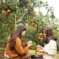 Giáo án mầm non đề tài: Vườn trái cây