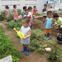 Giáo án mầm non đề tài: Bé trồng cây
