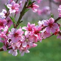 Hướng dẫn chơi hoa ngày tết