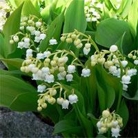 Cắm hoa ngày Tết đúng cách để tránh xa bệnh tật