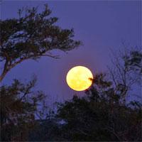 Giáo án bài Ngắm trăng