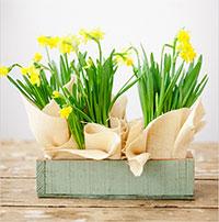 3 mẫu cắm hoa ngày 8-3 bạn không nên bỏ qua