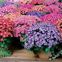14 loại hoa đẹp mùa hè bạn nên trồng ngay