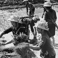 Giáo án Lịch sử 9 bài Xây dựng chủ nghĩa xã hội ở miền Bắc, đấu tranh chống đế quốc Mĩ và chính quyền Sài Gòn ở miền Nam (1954 - 1965) (tiếp)