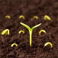 Cách ngâm ủ hạt giống đúng kỹ thuật