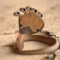 Thử thách sự hiểu biết về các loài rắn độc