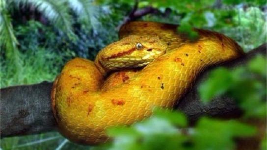các loài rắn độc