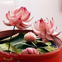 Học cách tỉa hành tây thành hoa dễ dàng