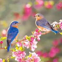 Flashcard cho bé - Chủ đề Mùa Xuân